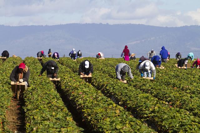 العمال الزراعيين