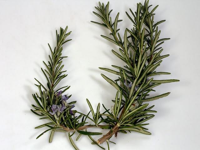 Biberiye bitkisi