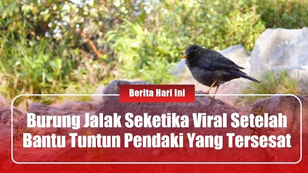 Burung Jalak Seketika Viral Setelah Bantu Tuntun Pendaki Yang Tersesat