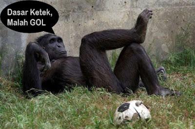 hewan monyet gokil lucu banget