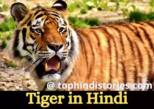 25 Amazing Facts & Information about Tiger in Hindi l National Animal