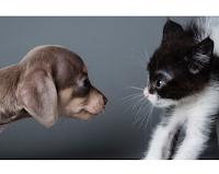 Pet Passion Purina Shop : rispondi al Quiz e ricevi un buono sconto ( premio certo)