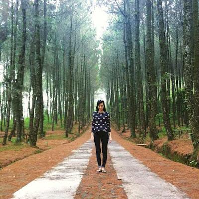 Top Selfie Pinus Kragilan Magelang