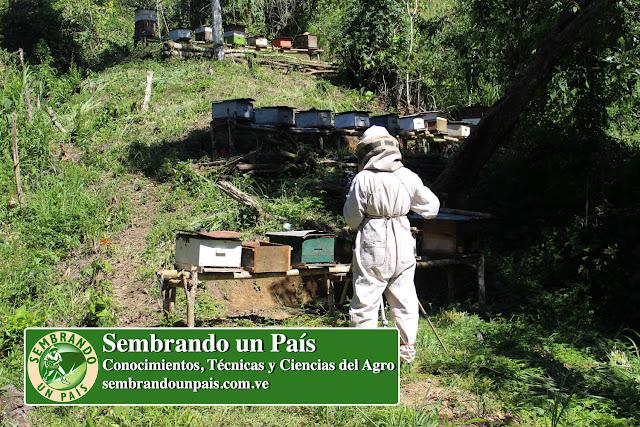 apiario con colmenas de abeja