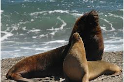 3 shocked of sea lions predators