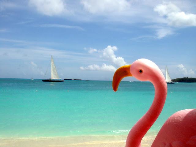 Rodrigo Flamingo - travel mascot in Caribbean