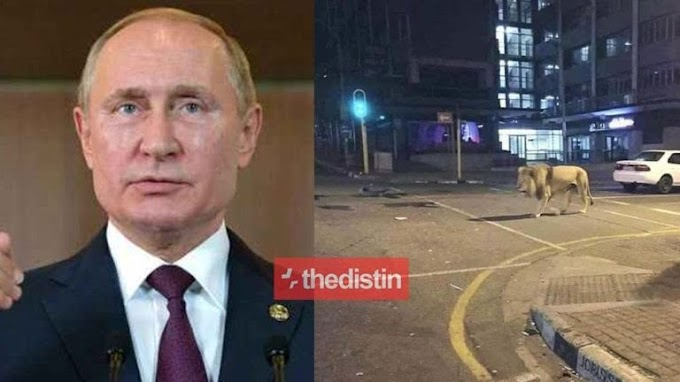 Coronavirus: Russian president Vladimir Putin released 800 tigers on russian streets  #Arewapublisize