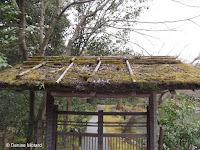 Thatched roof gate, Kinkaku-ji Garden - Kyoto, Japan