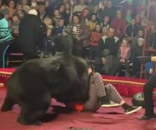 Urso ataca adestrador durante apresentação em circo