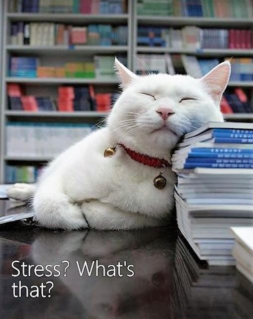 Can stress make cats sick?
