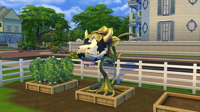 Садоводство в игре «The Sims 4»: тонкости, рекомендации, секреты, обзор, http://prazdnichnymir.ru, «The Sims 4», садоводство, игра, развлечения, компьютерные игры, симуляторы, Sims, Sims 4, растения, овощи, фрукты, травы, каталог растений, советы, советы игровые, интересное об играх, секреты игр, коды игровые, персонажи игровые, сад, огород, садовник, садоводство в игре,