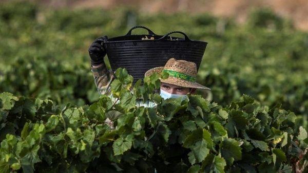 FAO alerta que Covid-19 puede agudizar el hambre en el mundo