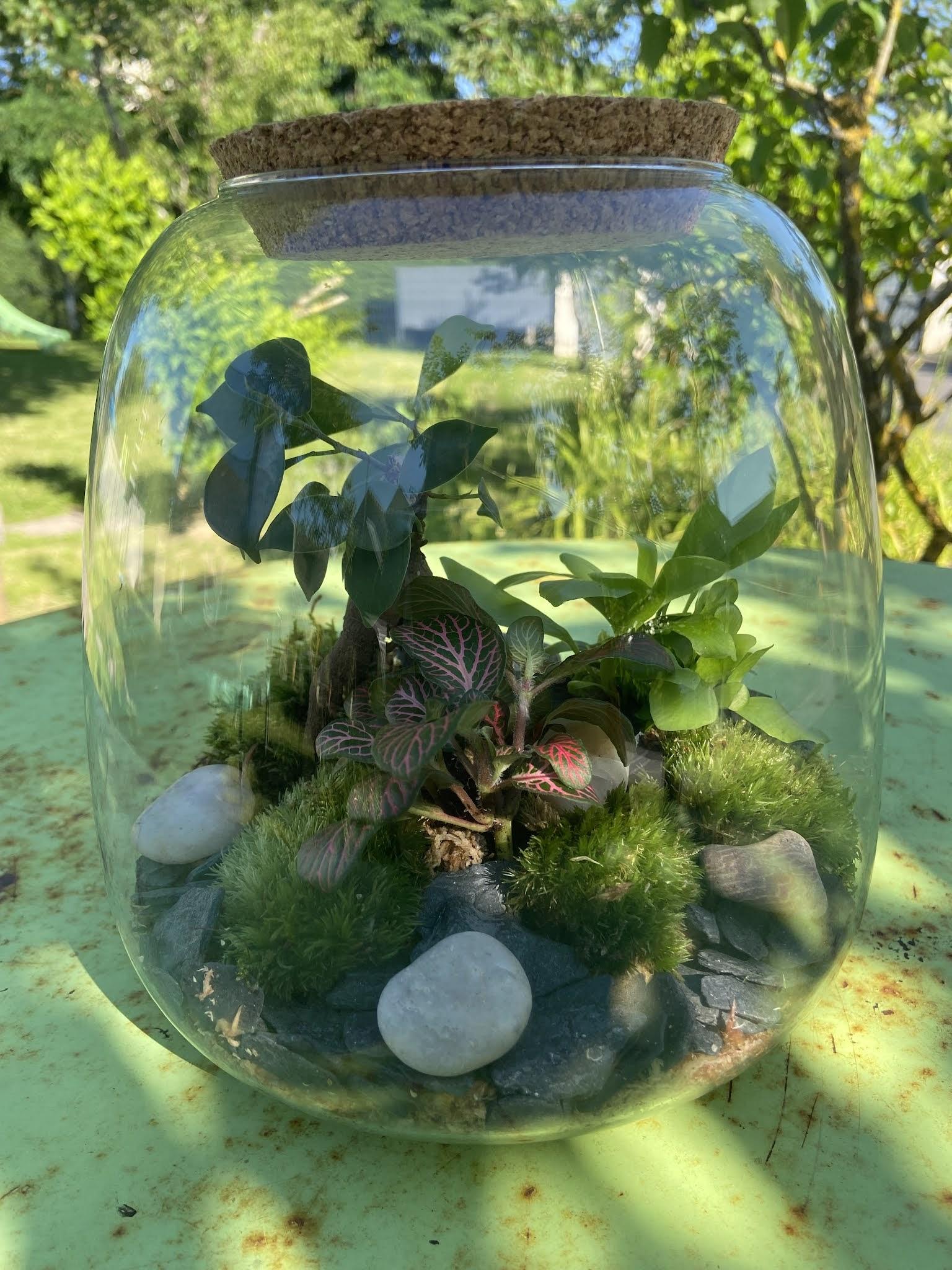 Un Kit Terrarium DIY grâce à Boby La Plante