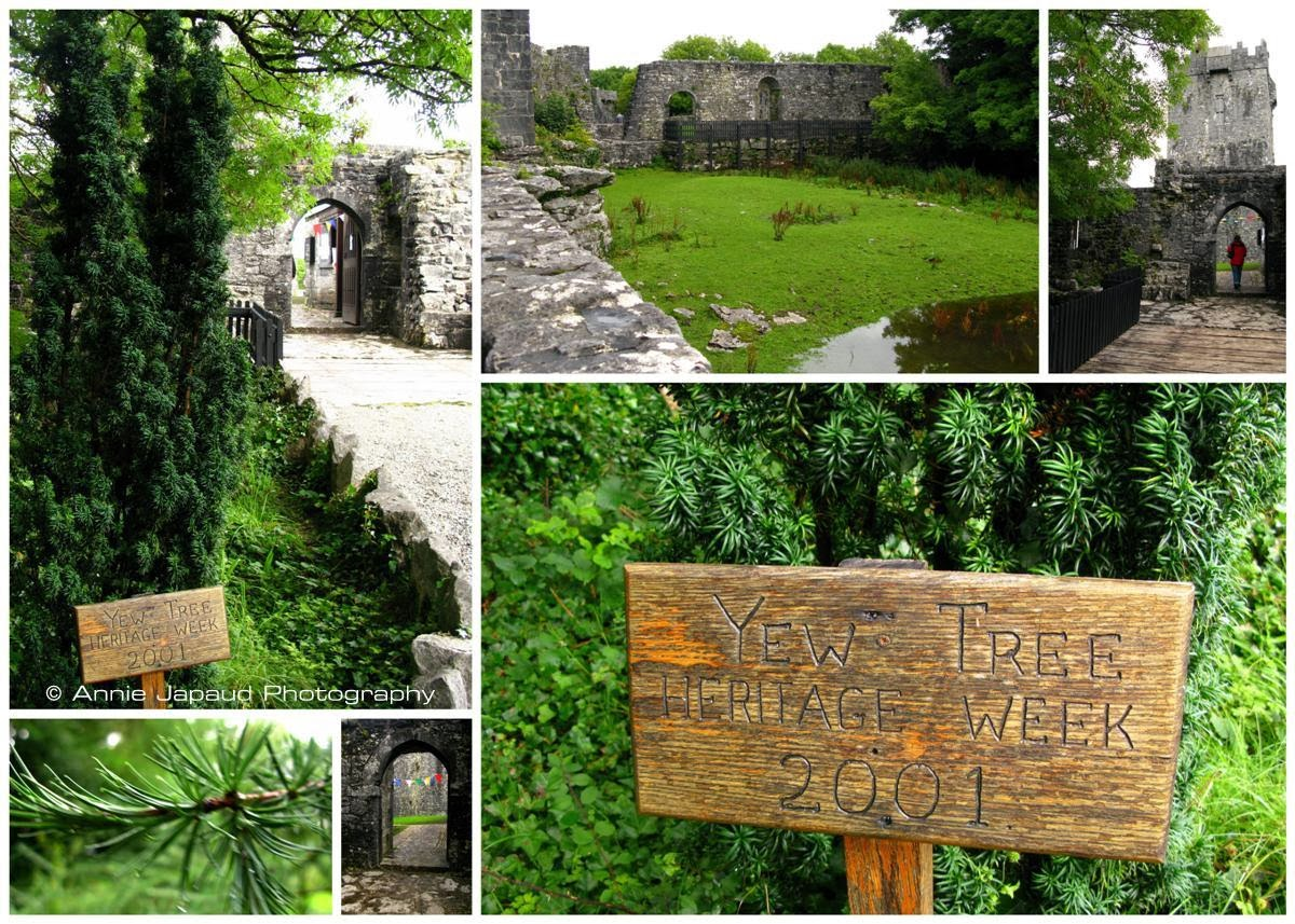 mixture of images from AUGHNANURE CASTLE, Oughterard, Co Galway, Ireland
