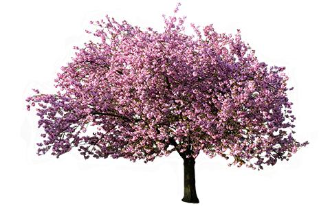 Small trees for tiny yards magnolia