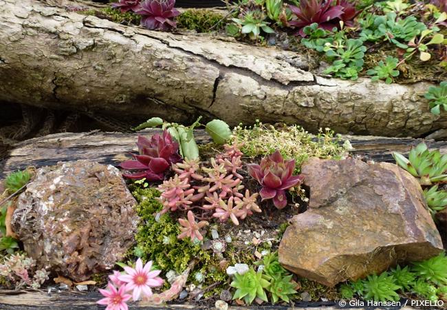 Anemoni: Ποιά φυτά είναι κατάλληλα για βραχόκηπους