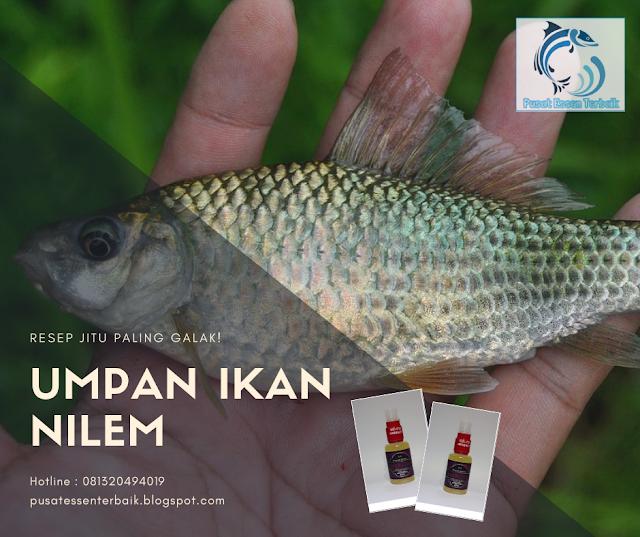 https://pusatessenterbaik.blogspot.com/2018/12/resep-jitu-umpan-ikan-nilem-paling-galak-mantapp.html