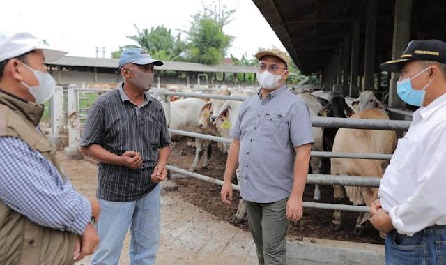 Gubernur Bangka Belitung di Lampung Jajaki Pembiakan Sapi Australia