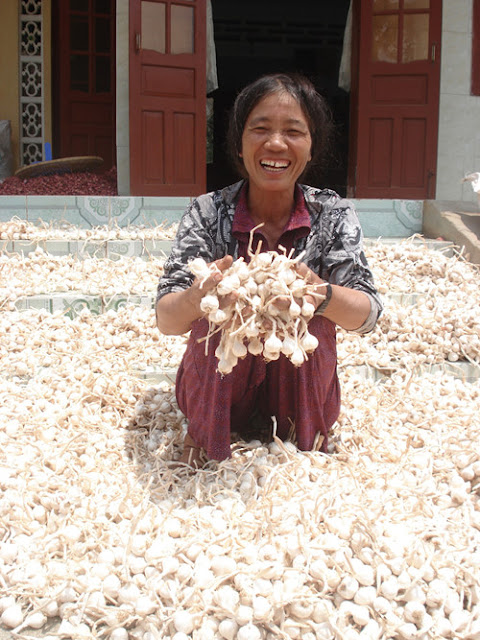 Với đặc trưng độc đáo thơm dịu, cay dịu và có hàm lượng tinh dầu cao, tỏi Lý Sơn được người tiêu dùng ưa chuộng