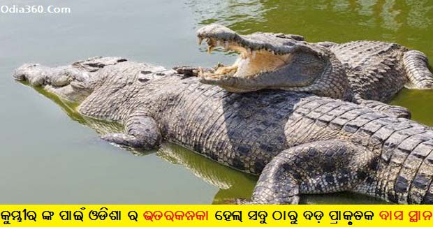 Bhitarkanika has become the largest habitat of crocodiles in India