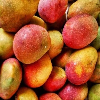 आंबा, Mango fruits name in Marathi
