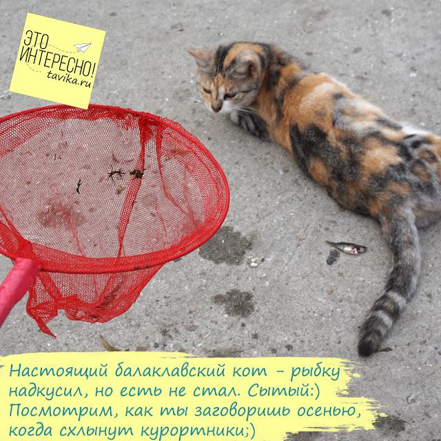 Балаклавский кот