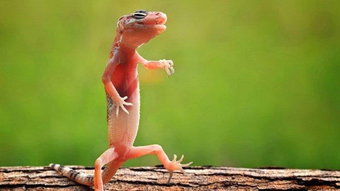 10 hewan peliharaan untuk anak-anak, Kadal, hewan kadal, kadal movie online, kadal cast, kadal malayalam movie, kadal meaning, kadal movie download, kadal kebun, kadal rumput, funny pet