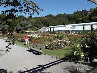The rose garden and glasshouse - Wellington Botanic Garden, New Zealand