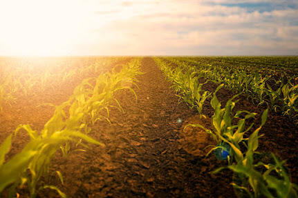 Sustainable agriculture is still an important issue.