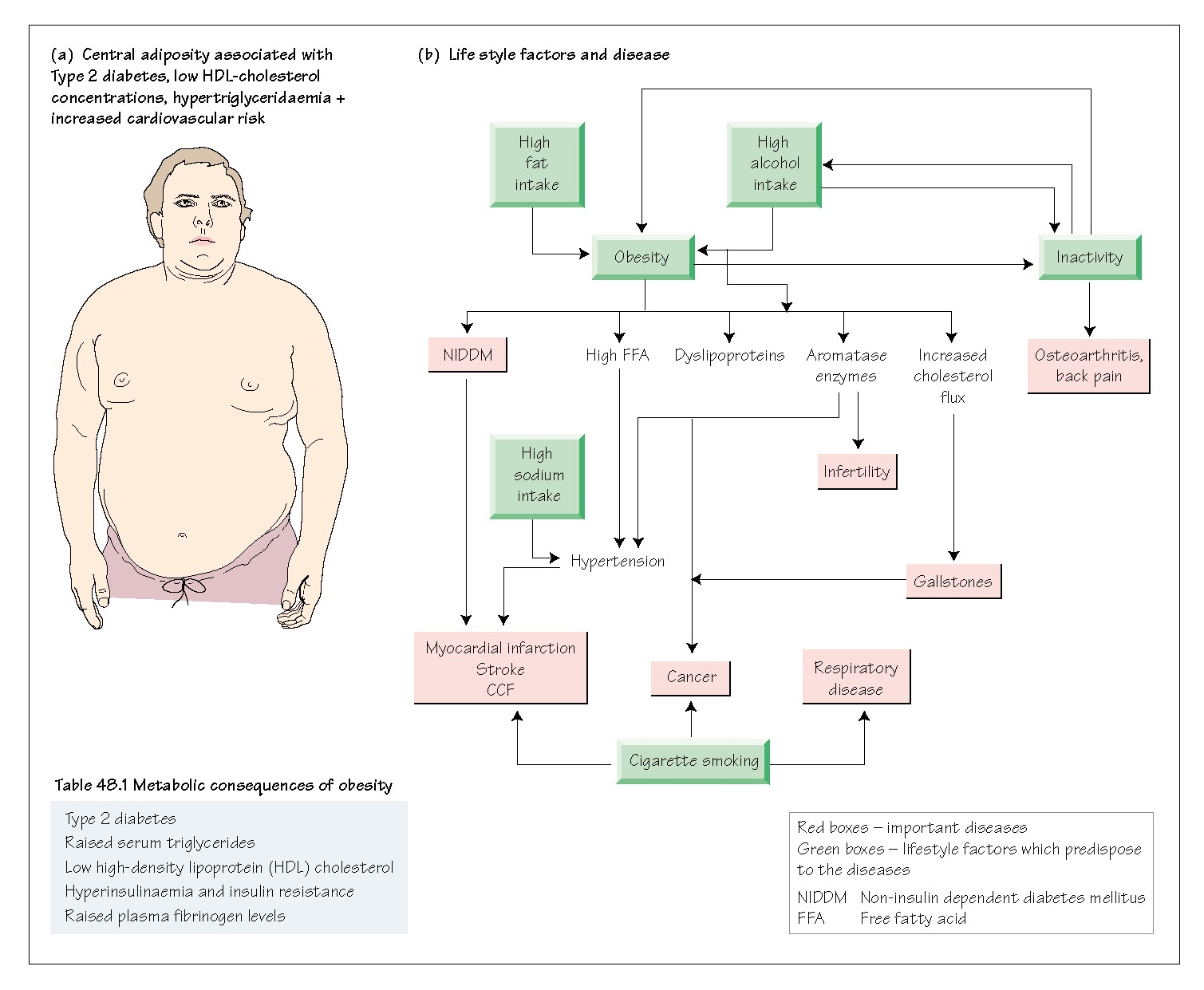 Obesity: III Insulin Resistance and Endocrine Complications, Type 2 diabetes