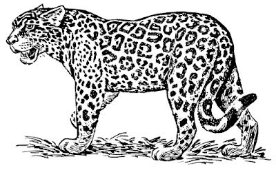 jaguar clipart from wpclipart.com