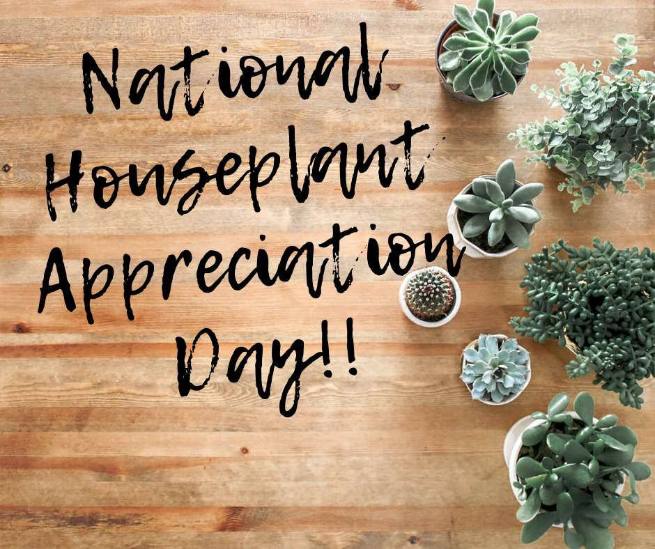 National Houseplant Appreciation Day Wishes for Instagram
