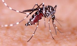 Tanda dan Gejala Penyakit Demam Berdarah Dengue (DBD)