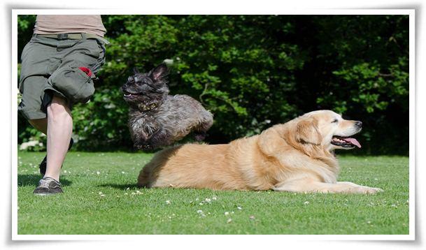 dog tricks list