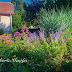 Virágos kertünk - Négy évszak színesen