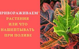 Магические шепотки на растения при поливе