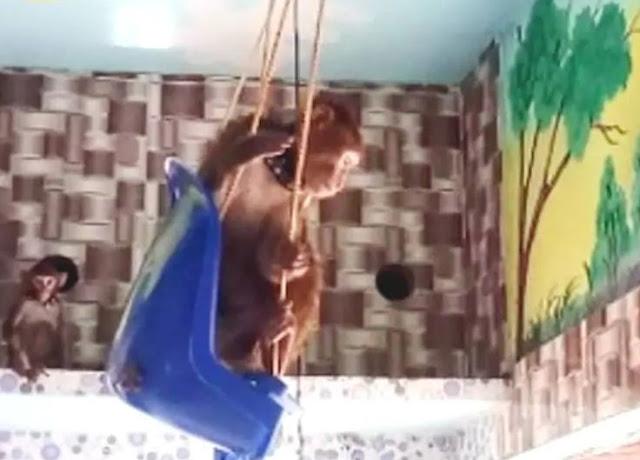एक शख्स ने बंदर के नाम की करोड़ों की संपत्ति - newsonfloor.com