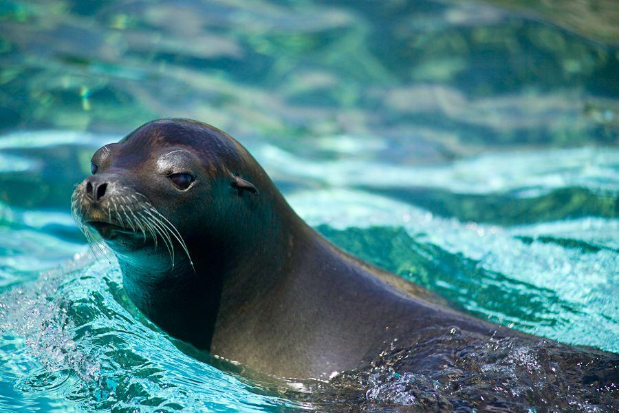 South Coast Vw >> Sea Lion | Animal Wildlife