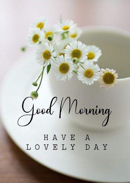 Good Morning flower Wishes Photos