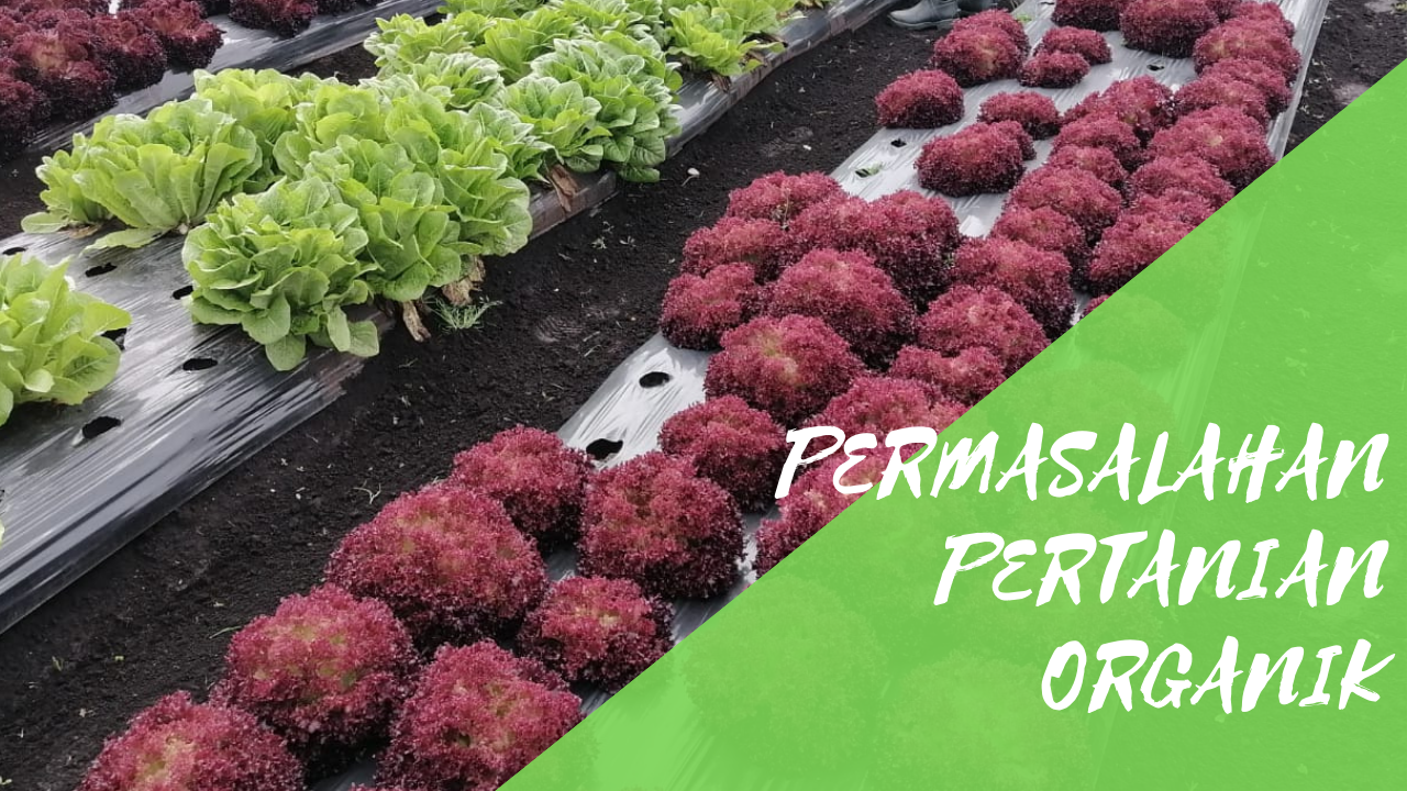 Permasalahan Dalam Pengembangan Pertanian Organik