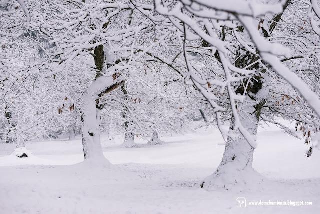 Marradi castagneto sotto la neve