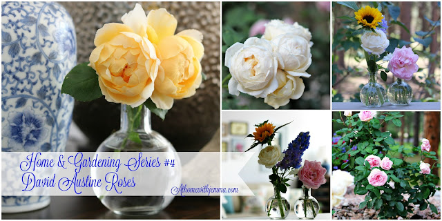 National, Gardening Day, Roses, homegrown, garden, gardens, market, athomewithjemma.com