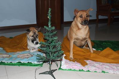 Frohe Weihnachten mit Hunden