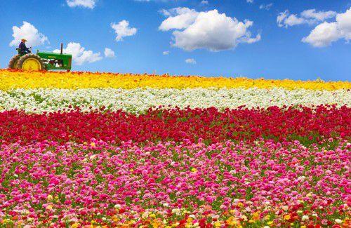 hoa đẹp nhất thế giới 5