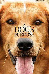 Where Can I Watch A Dogs Purpose Movie For Free
