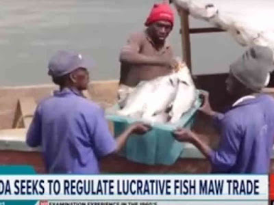 Uganda Seeks to Regulate Fish Maw Trade