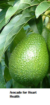 Amazing health benefits of Avocado Butter Fruit Makhanphal - Avocado for Heart Health