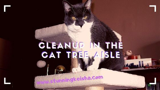 Cleanup in the Cat Tree Aisle