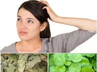 Membuat Ramuan Herbal untuk Meningkatkan Daya Ingat dari Prof. H.M. Hembing Wijayakusuma