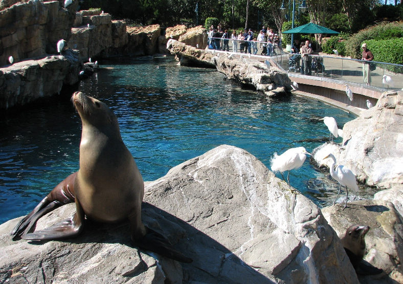 Pacific Point Preserve no Sea World em Orlando